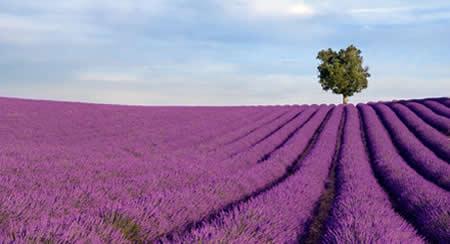 Dans la Drôme, venez vous ressourcer dans le Vercors