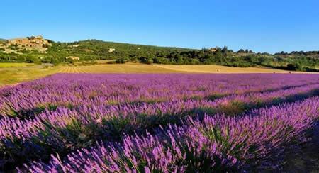 Le charme des terres de Provence dans le Vaucluse