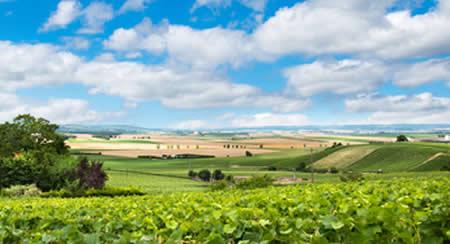 Camping en Champagne-Ardenne, forêts, lac et gastronomie