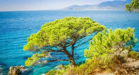 Profitez du soleil et de la mer Méditerranée en Provence-Alpes-Côte d'Azur